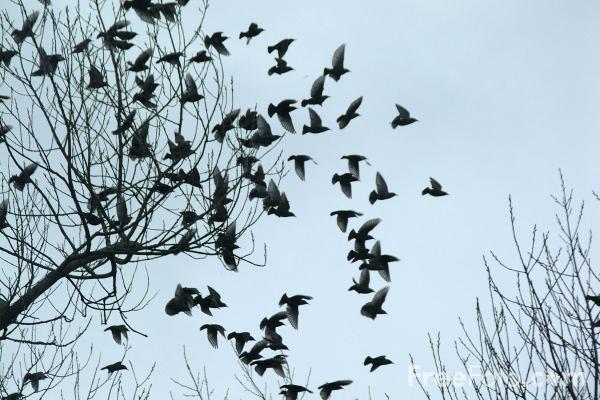 много птиц собирается на крышах перевод устройство