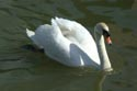 Image Ref: 01-19-4 - Swan, Viewed 11394 times