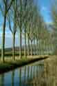 Image Ref: 03-03-80 - Tree-lined Canal, Damme, Belgium, Viewed 5918 times