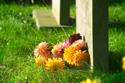 Image Ref: 05-23-4 - Graveyard, Viewed 5227 times