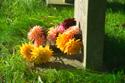 Image Ref: 05-23-6 - Graveyard, Viewed 5279 times