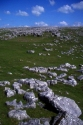 Great Asby Scar Limestone Pavement has been viewed 7376 times