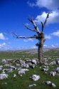 Great Asby Scar Limestone Pavement has been viewed 6634 times
