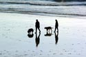 Walking the dogs on Hastings three miles of beach has been viewed 7167 times