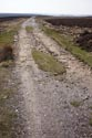 Lead Mining Trail, Edmundbyers Common has been viewed 4802 times