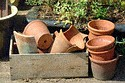 Image Ref: 12-04-10 - Plant Pots, Viewed 8272 times