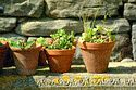 Image Ref: 12-04-8 - Plant Pots, Viewed 12019 times