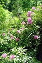 Image Ref: 12-46-54 - Rhododendron, Viewed 7114 times