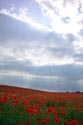 Image Ref: 12-71-57 - Field of Poppies, Viewed 5159 times