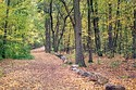 Image Ref: 1212-05-14 - Fall Color, Walden Pond, Massachusetts, Viewed 6105 times