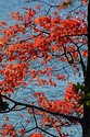 Image Ref: 1212-05-54 - Fall Color, Walden Pond, Massachusetts, Viewed 8501 times