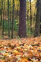 Image Ref: 1212-05-57 - Fall Color, Walden Pond, Massachusetts, Viewed 6257 times