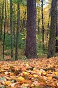 Image Ref: 1212-05-58 - Fall Color, Walden Pond, Massachusetts, Viewed 5736 times