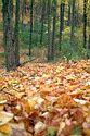 Image Ref: 1212-05-60 - Walden Pond, Massachusetts, Viewed 5583 times
