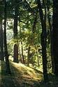 Image Ref: 1212-05-66 - Walden Pond, Massachusetts, Viewed 5564 times