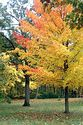 Image Ref: 1212-05-68 - Fall Color, Walden Pond, Massachusetts, Viewed 5818 times