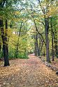 Image Ref: 1212-05-69 - Fall Color, Walden Pond, Massachusetts, Viewed 6894 times