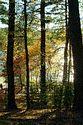 Image Ref: 1212-05-74 - Walden Pond, Massachusetts, Viewed 6633 times