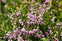 Image Ref: 15-05-22 - Heather, Viewed 11775 times