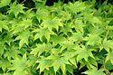 Image Ref: 15-09-8 - Leaves, Viewed 25165 times