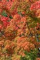 Autumn color in Vermont has been viewed 64605 times