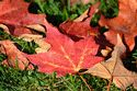 Autumn color in Vermont has been viewed 10651 times