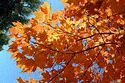 Autumn color in New England has been viewed 7406 times