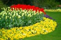 Image Ref: 19-11-28 - Tulips, Viewed 10119 times