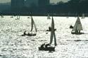 Sailing, Charles River, Boston, USA has been viewed 6430 times