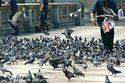 Trafalgar Square, London, England has been viewed 11824 times