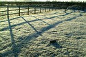 Image Ref: 90-01-1 - Frosty Morning, Viewed 13618 times