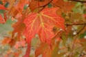 Image Ref: 9907-10-20 - Fall Color, Viewed 6845 times