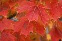Fall Color has been viewed 12181 times