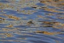 Image Ref: 9908-01-17 - Water Reflection, Viewed 13406 times