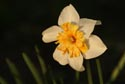 Image Ref: 9908-05-18 - Daffodils, Viewed 3636 times
