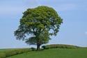 Image Ref: 9908-05-34 - Tree, Viewed 4718 times