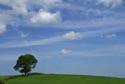 Image Ref: 9908-05-35 - Tree, Viewed 4875 times