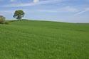 Image Ref: 9908-05-36 - Tree, Viewed 4513 times