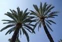 Palm Trees, Jardin Maria Serena, Menton has been viewed 5318 times