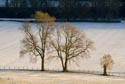 Trees in the snow has been viewed 10526 times