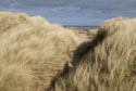 Image Ref: 9909-03-443 - Grass covered sand dunes and footpath, Viewed 8801 times