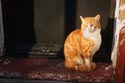 Cat sat on a doorstep has been viewed 4729 times