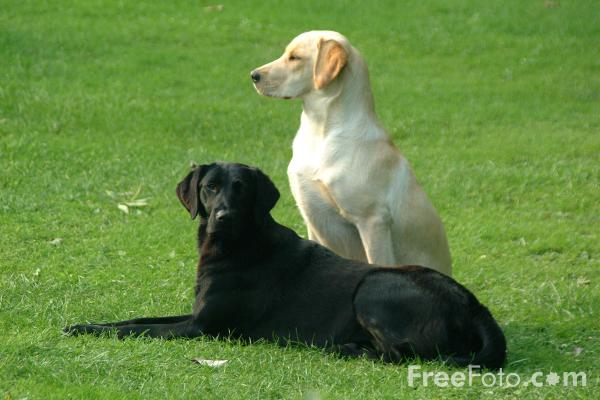 Picture of Pair of Dogs - Free Pictures - FreeFoto.com