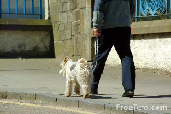 Picture of Dog - Free Pictures - FreeFoto.com