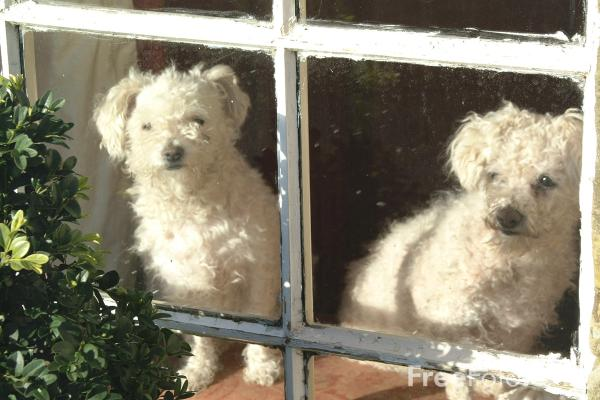 Picture of Dogs in a window - Free Pictures - FreeFoto.com
