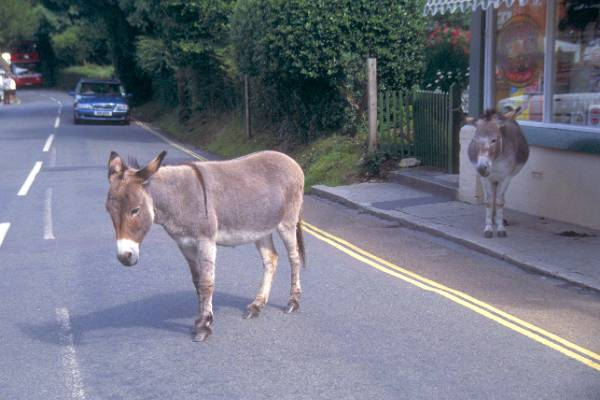Picture of Donkey - Free Pictures - FreeFoto.com