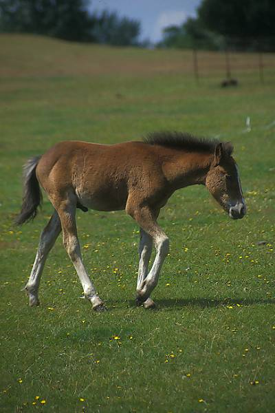 Picture of Foal - Free Pictures - FreeFoto.com