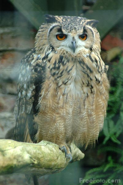 owl pictures free use image 011353 by freefotocom