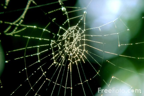 Picture of Spiders Web - Free Pictures - FreeFoto.com