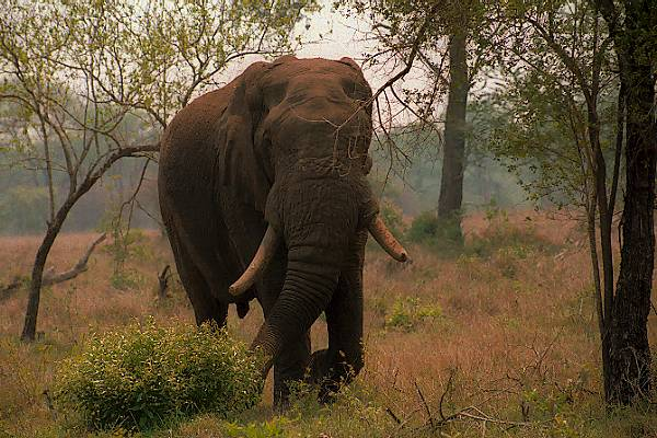 Picture of Elephant - Free Pictures - FreeFoto.com